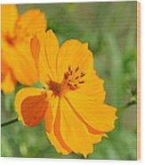 Orange Wildflower Wood Print