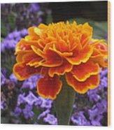 Orange With Blue Wood Print