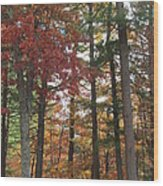 Orange Woods Wood Print