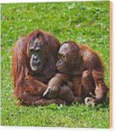 Orangutan Mother And Child Wood Print by Gabriela Insuratelu