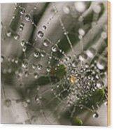 Orbiting The Web Wood Print