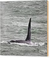 Orca On The Move Wood Print