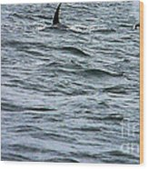 Orca Whales Wood Print