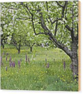 Orchard With Flowering Orchids Wood Print