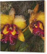 Orchid - Cattleya - Dripping With Passion  Wood Print