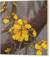 Orchid - Golden Morning  Wood Print