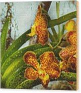 Orchid - Oncidium - Ripened   Wood Print