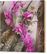Orchid - Tropical Passion Wood Print