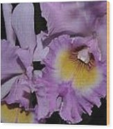 Orchid 234 Wood Print