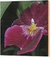 Orchid 252 Wood Print