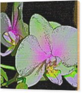 Orchid 5 Wood Print