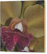 Orchid 85 Wood Print