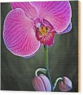 Orchid And Buds Wood Print