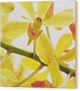 Orchid Wood Print by Atiketta Sangasaeng