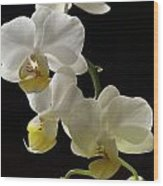 Orchid Blossom Cluster Wood Print