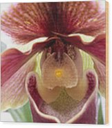 Orchid Interior Wood Print