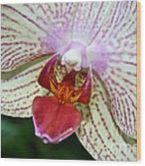 Orchid Close Up Wood Print