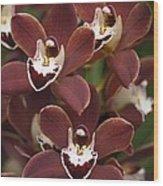Orchid (cymbidium Sp.) Wood Print