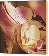 Orchid Fangs Wood Print