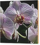 Orchid Flower Blooms Wood Print