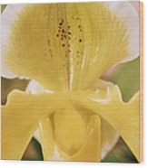 Orchid Flower Wood Print by Cristina Pedrazzini