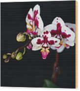 Orchid Flowers Against Black Background Wood Print