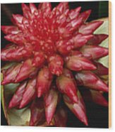 Orchid From The Autana Tepui Wood Print