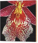 Orchid Hybrid Wood Print