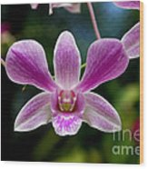 Orchid In Kandy Wood Print