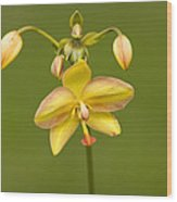 Orchid Number 1 Wood Print