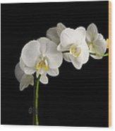 Orchid On Black Wood Print