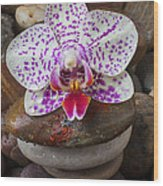 Orchid On Stack Of Rocks Wood Print