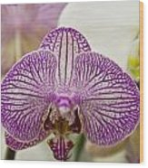 Orchid Originality Wood Print