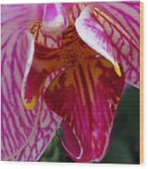 Orchid Purple Extreme Close Up Wood Print