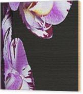 Orchid Stem Wood Print