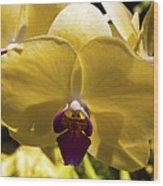 Orchid Study Vi Wood Print