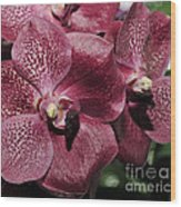 Orchid Vanda And Ascocenda Hybrid II Wood Print