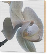 Orchids 1 Wood Print by Mike McGlothlen