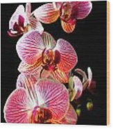 Orchids 2 Wood Print