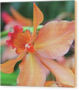 Orchids 25 Wood Print by Becky Lodes