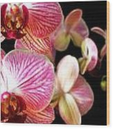 Orchids 3 Wood Print