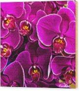 Orchids A Plenty Wood Print