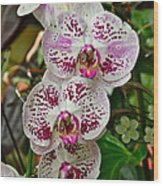 Orchids For You Wood Print