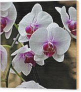 Orchids For Your Day Wood Print