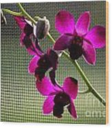 Orchids In The Sunlight Wood Print
