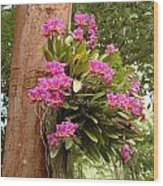 Orchids On Tree Wood Print