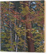 Oregon Madrone Wood Print