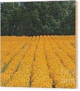 Oregon Orange Field Wood Print