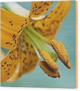 Oregon, United States Of America A Lily Wood Print