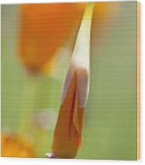 Oregon, United States Of America Poppy Wood Print